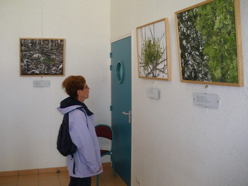 exposition-la-poetique-vegetale-de-coute-par-francois-robin